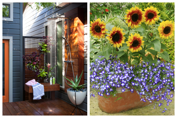An outdoor shower with plants and a sunflower summer container garden